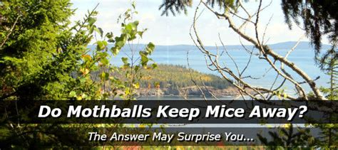 how to keep mice out of house do mothballs keep mice away how to get rid of mice