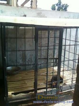 Jual Kandang Pagar Bandung dunia anjing jual anjing golden retriever jual golden