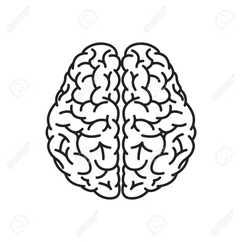 brain clipart brain outline pencil and in color brain