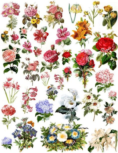 free printable decoupage flowers 88 best scrapbooking printables images on pinterest