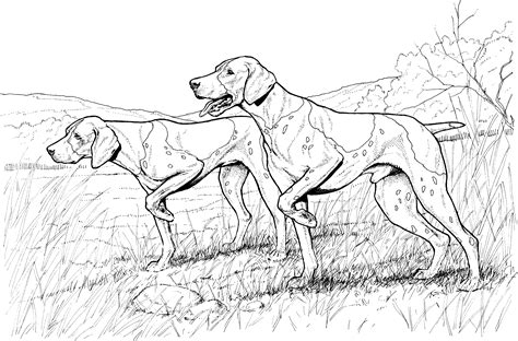 coloring pages of coon dogs free schnauzer dogs coloring pages