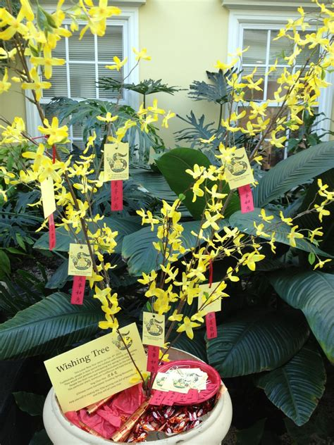 new year wishing tree new year wishing tree 28 images new year 2016 images