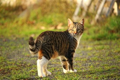 backyard cat indoors or outdoors where should you keep your cat off