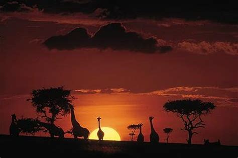 Big Picture Post Nation 3 by Serena Hotels Verso Un Co Di Tende Di Lusso In Kenya