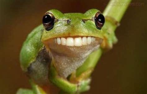imagenes ironicas de la rana el web de la rana 161 regresamos bienestar en forma