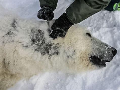 polar black skin
