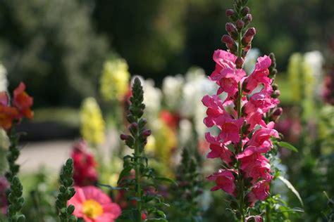 bocca di fiore bocca di coltivazione