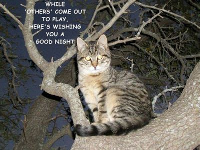 good night tree kitty  good night ecards greeting cards