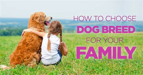 choosing the best dog breed for your family and children how to choose the right dog breed for your family