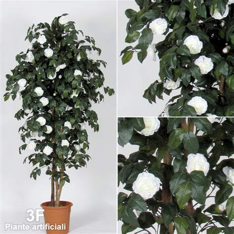 camelia in vaso camelia medium 42 altezza cm 150 216 vaso cm 22 3f