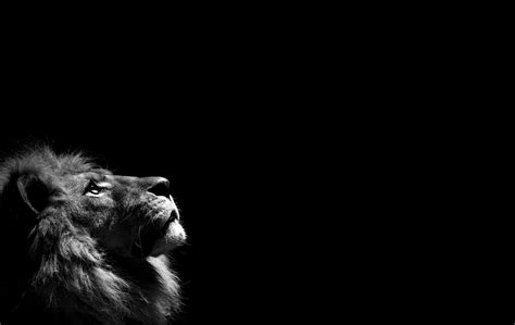 Black And White Black And White Background Wallpapers 52dazhew Gallery