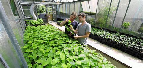 garten kaufen ortenau forstbotaniker z 252 chten tr 252 ffelpflanzen in freiburg