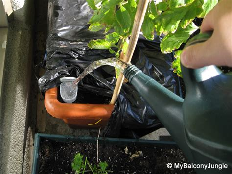 self watering self watering containers