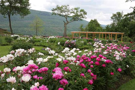 Garden Of Vt Best Flower Festivals In New New