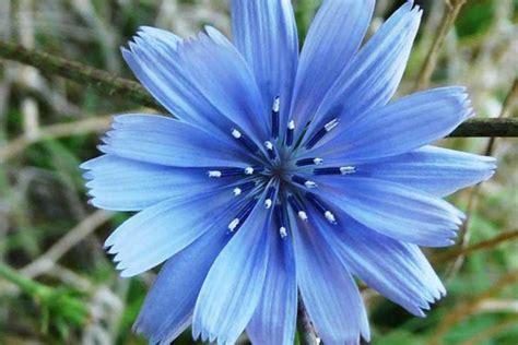 fiori di bach per neonati fiori di bach per bambini paurosi naturopataonline