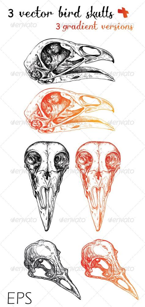 bird skull tattoo 3 vector bird skulls 3 gradient versions bird skull