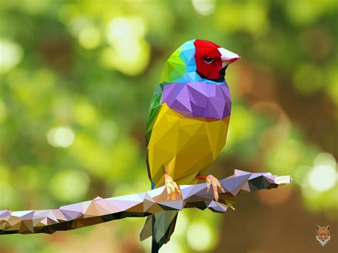 colorful bird pictures colorful birds