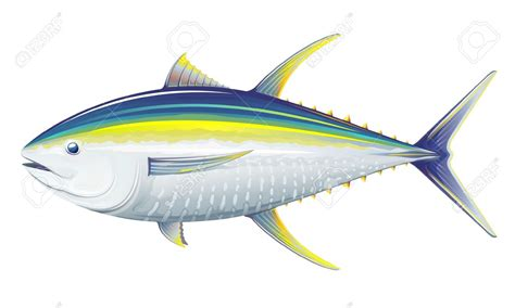 no matter how many fish in the sea fins clipart sea fish pencil and in color fins clipart