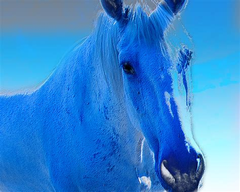 blue horses blue of the day