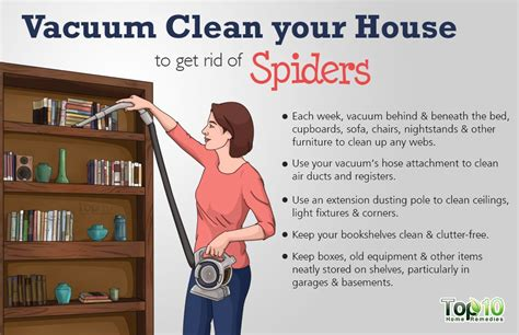 clean your home how to safely get rid of spiders from your house top 10