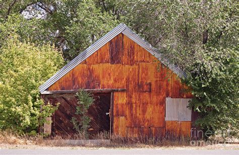 Tin Shed by Tin Shed Photograph By Donna Greene