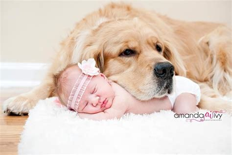 puppy and baby quot will keep you and warm my baby quot dogs pets goldenretrievers children