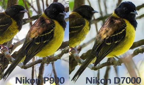 Nikon P900 Or Bad by Nikon P900 Vs Nikon D7000 Nikkor 300mm 2 8 Vr 2xtc Nikon Coolpix Talk Forum Digital