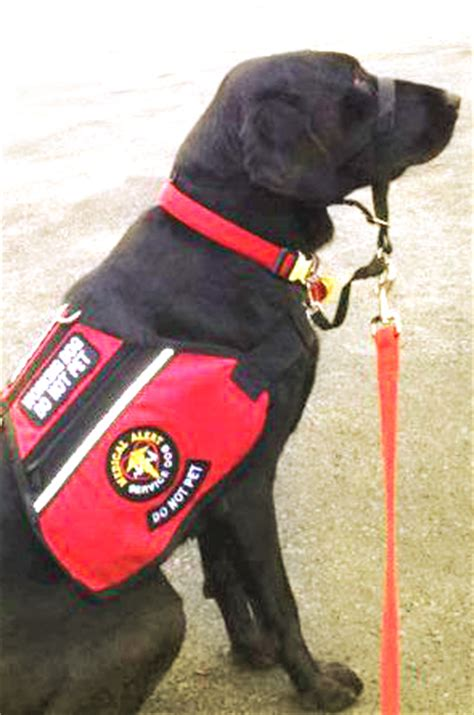 service dogs of america service dogs for america about us