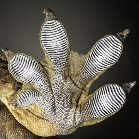 0007179898 the gecko s foot how scientists gecko foot silicone to hardplastics interlocking