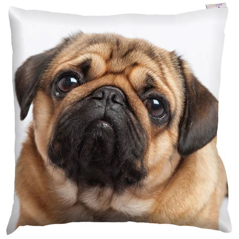 best food for pugs uk pug photo design cushion cover with insert 50 x 50cm 15315 puckator ltd