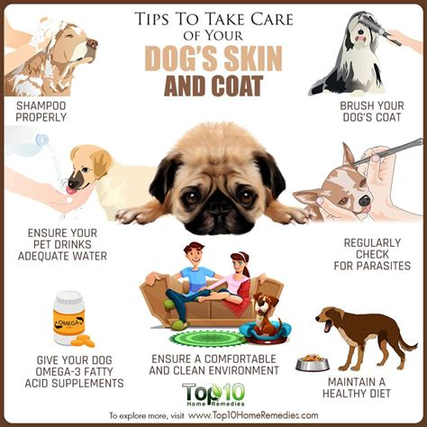 Puppy S At Home by Tips To Take Care Of Your Dog S Skin And Coat Top 10