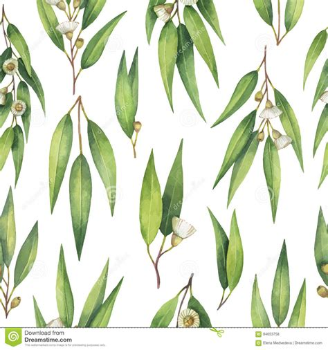 printable eucalyptus leaves watercolor vector seamless pattern with eucalyptus leaves