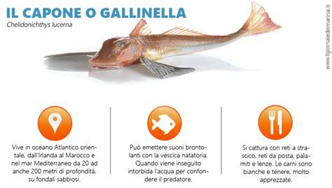 Come Cucinare La Gallinella Pesce - il capone gallinella