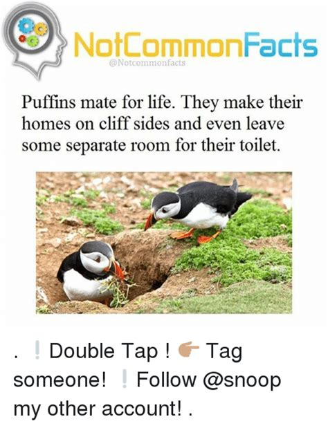 25 best memes about puffins puffins memes