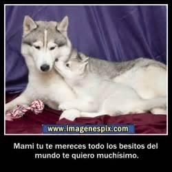 im 225 genes de lobos con frases im 225 genes con frases amor frases facebook im genes de amor im genes de lobos con