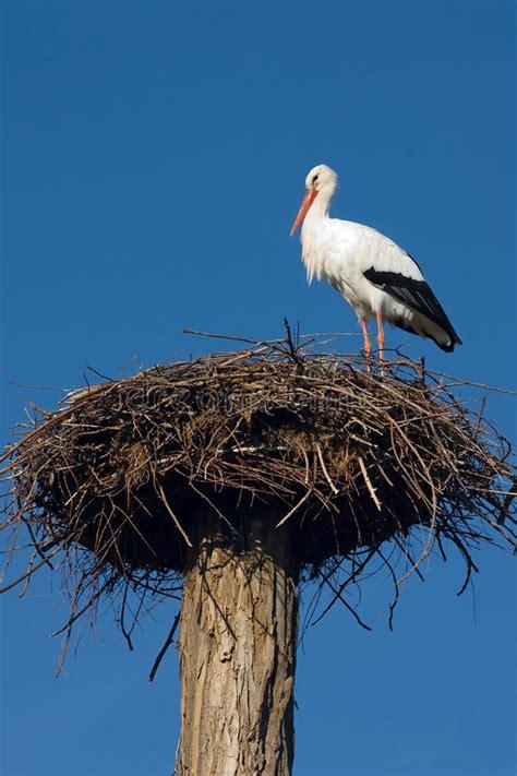 stork animal house stork in the nest royalty free stock photos image 12854918