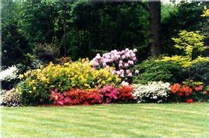 Flowering Plants For Shade Rhododendron Eng
