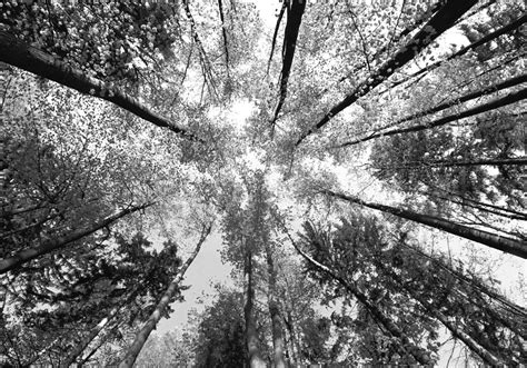 Tapisserie Panoramique by Papier Peint Panoramique Arbres
