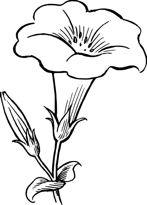 black  white flower border clipart flower black white