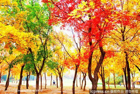 imagenes de paisajes sin color paisajes y colores del oto 241 o m 225 s atractivo spanish china
