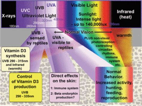 Infrared L Health Benefits by La Lumi 232 Re Pour Les Reptiles