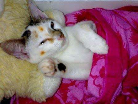 membuat puisi kucing cnak dozzy blog ciri ciri kucing sakit