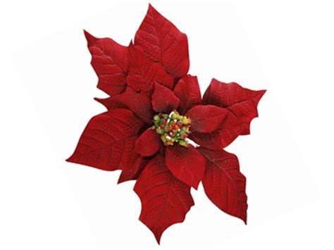 poinsettia flower meaning symbolism teleflora