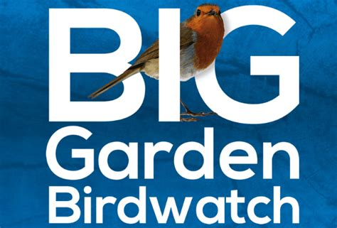 Rspb Great Garden Birdwatch Results Are In by Rspb Big Garden Birdwatch Burlington Junior School