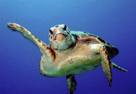 google images turtle mockturtlealumni2