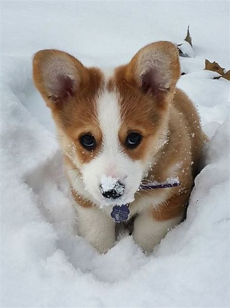 adorable small puppies best 25 small dogs ideas on small dogs