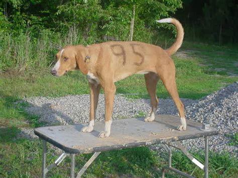 speed dogs net index www geocities ws