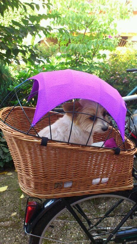 bicycle baskets for dogs bike basket for dogs found image on fbook page chio co