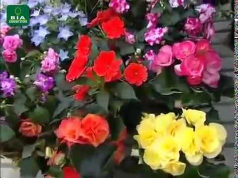 fiori tutto l anno un balcone fiorito tutto l anno