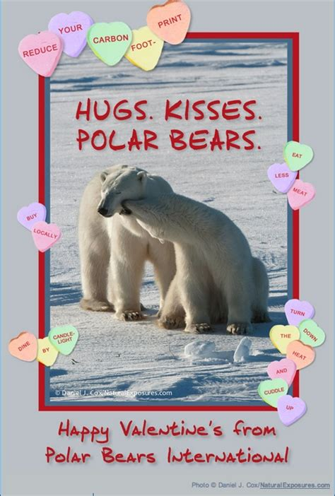 paolo the happy polar books happy s day from polar bears international http